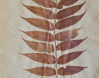 Beautiful antique herbarium