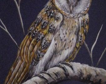 Barn Owl Bird Wildlife Night Landscape Scene print