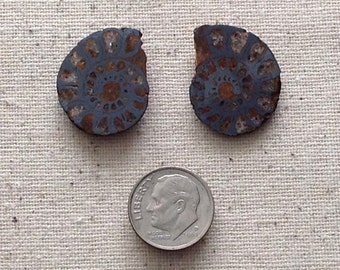 Ammonite Polished Pair Pyritized Fossil AMPP 123