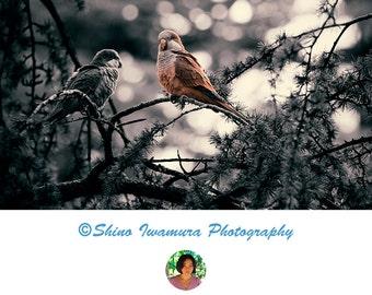 Bird Photography Bird Photo, Bird Photos - Nature Photo, Photo Print Photo Printable Photo Download