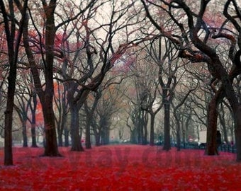 Central Park, New York Print, Red, Black, Gray, Nature Photography, Large Wall Art, Fall, Spooky Trees