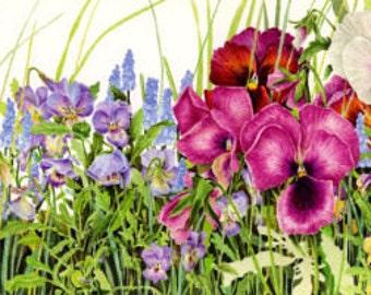 """Pansy Border- 6""""x19""""long Botanical Watercolor"""