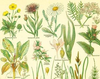 1922 Antique Botanical print of Wild Flowers. Chart Identification. French vintage illustration Larousse