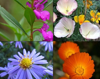 Rare Windowsill Mix, flowers - 1g - UK SELLER