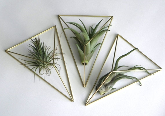 Wall hanger air plant himmeli diamond mobile geometric for Geometric air plant holder