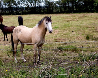 Photograph Digital File JPEG Download - Horses in a field