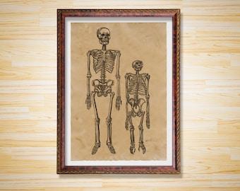 Skeletons poster Medical print Anatomy decor