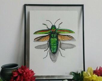 Jewel beetle 1/5
