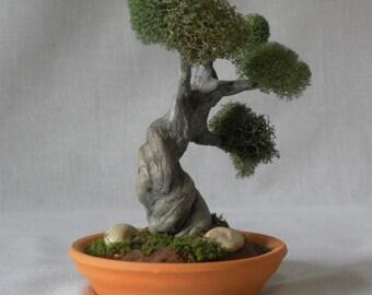 MB10 Miniature Bonsai tree with stones in terra cotta planter