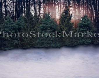 Winter Evergreen Backdrop - Digital Background - New England Pine trees - Wooded Winter Scene -  Photoshop Background - Winder Snow - Trees
