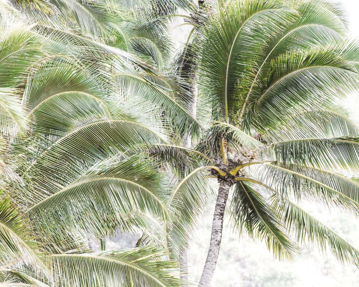 Https Colorpopphotoshop Wordpress Com 2016 02 15 Beach House Decor Green Nature Print Palm Tree Wall Decor Beach Casual Island Style Tropical Vibes Tropical Decor Tree Photography