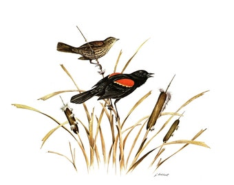 A Large Print (12 inches tall and 15 inches wide) of the Redwing painted by James Lockhart for the book Wild America