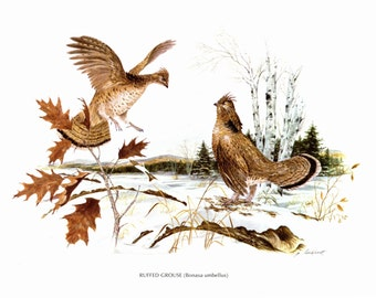 "A large print of Ruffed Grouse painted by James Lockhart for the Book Wild America. The bookplate is 15"" wide and 12"" tall."