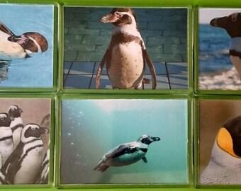 Penguin Fridge Magnet, Set of 6/ Refrigerator Magnets / Kitchen Decor