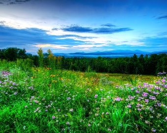 Landscape Photograph, Wildflowers, Outdoor Photo, Dawn Photo, Mountain Photography, Adirondack Mountains, Adirondack Photo, Landscape Art