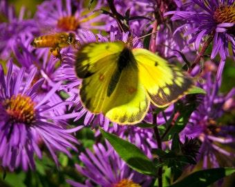 yellow butterfly, purple flower