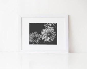Fine art black and white dandelion macro photography print, 5x7 8x10, unique nursery decor, affordable wall art, fine art still life photo