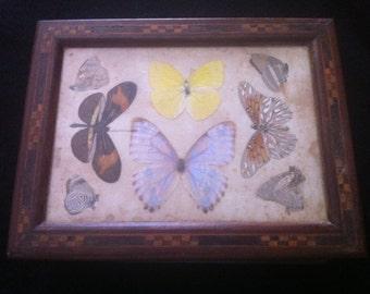 Vintage Brazilian Butterfly/Keepsake/Trinket Box