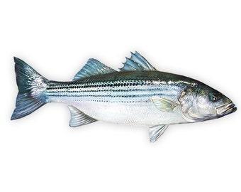 Striped Bass Decal - Striped Bass Sticker