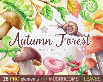Autumn Forest watercolor Clip Art. Leaves, eatable mushrooms, snail, fern, boletus, chanterelle, fall. 25 PNG elements, 2 jpeg backgrounds