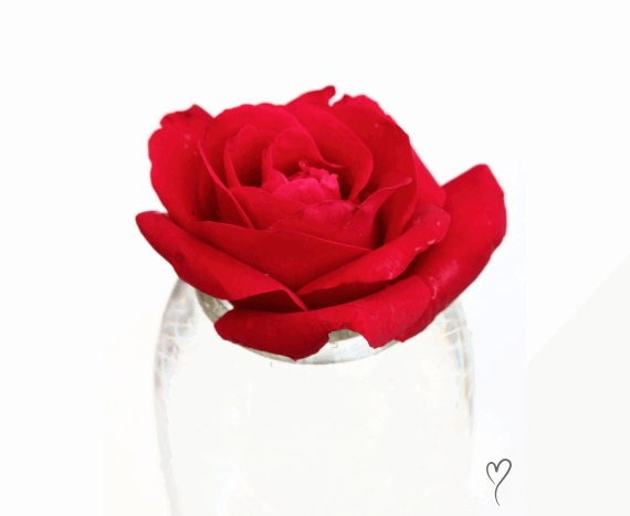 """Rose Photograph, Floral Photography, Red Art Print, Red Print, MODERN HOME DECOR, Red Home Decor, Gift for Her, Red Art """"Rose and Glass"""""""