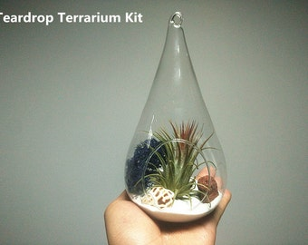 Air plant kit with Ionantha Mexico air plant,teardrop terrarium,tiny white sand,dark blue dried moss,volcano rock,Babylon shell