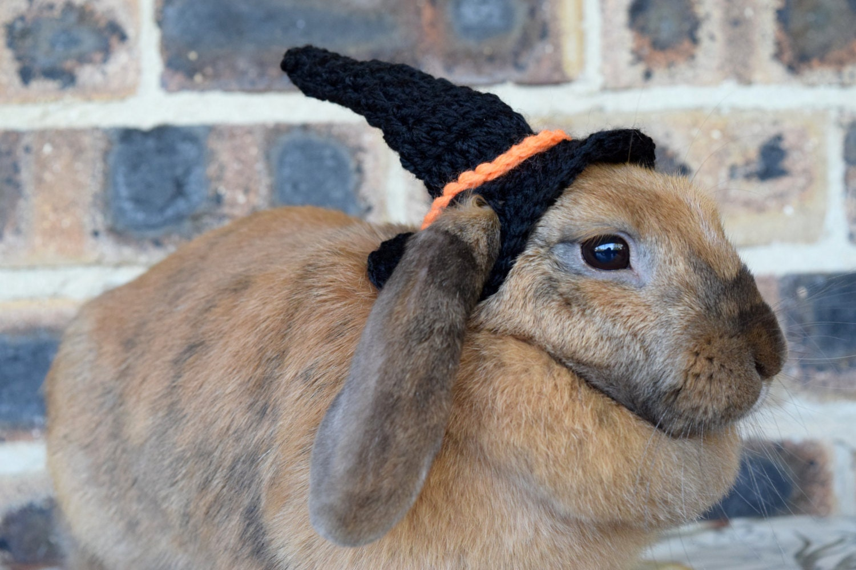 Need Help Placing my Rabbit!!  Rabbit amp Pocket Pet Education
