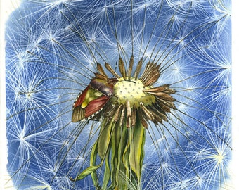 Insect on a dandelion - Original watercolour paintings  by Andrea Rossi