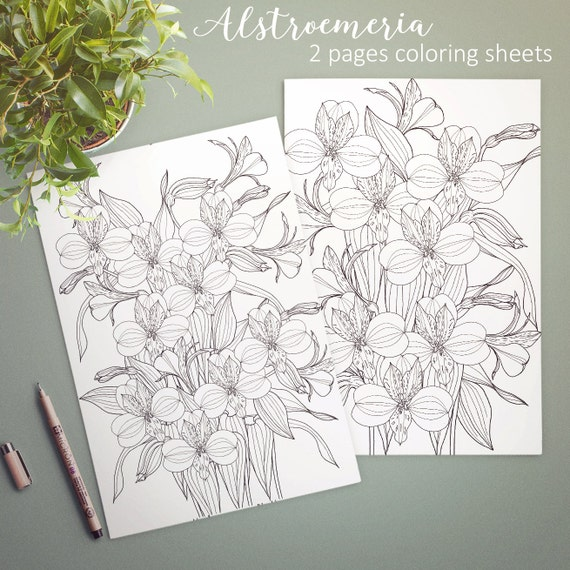 alstroemeria coloring pages - photo#2