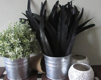 Black Feathers - Rooster Tail Feathers