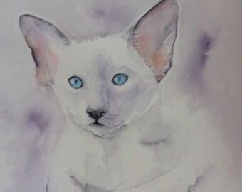 Siamese kitten watercolour painting