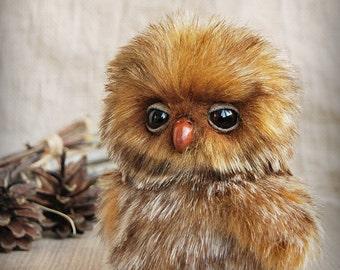 Owlet Phil (Reserve!!!)