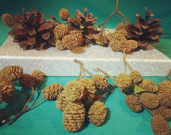 ECO ALDER cones with PINE cones, Natural Alder cones, Brown mini pine cones, Crafting, Dried Alder Pine Cones, Mini Brown cones.