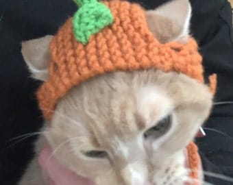 Knitted hat for cat