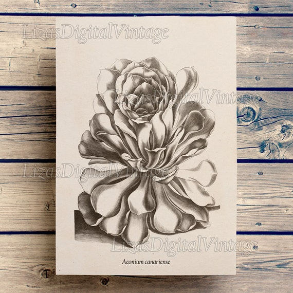 Digital print art, Succulent print, Botanical Illustration, Digital flower, Succulent wall art, Flower illustration, Large print art JPG PNG