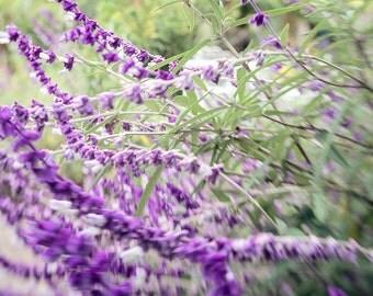 Flores de Cusin