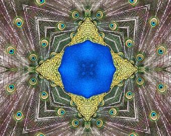 Peacock mandala greeting card
