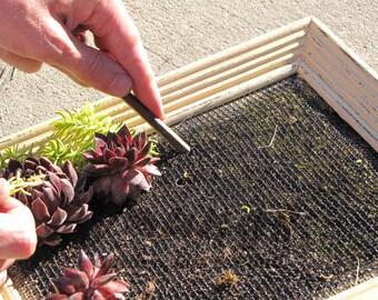 DIY - Vertical Succulent Garden