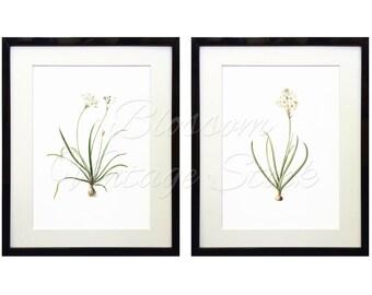 White Flowers Botanical Print Set, Vintage Botanical Prints, Illustrations INSTANT DOWNLOAD Digital Images 5x7, 8x10, 11x14 Included - 1521