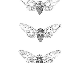 Cicada Print (A4)