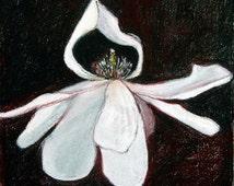 Prayer- Pastel drawing - pink, black and white - magnolia flower - petals - still life - flower - drawing - art - Australian art