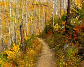 Dreamy Path (Glacier National Park)