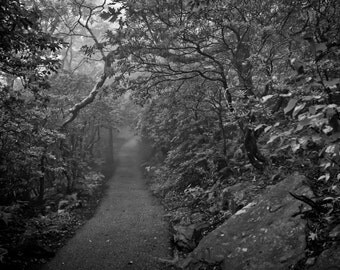 Foggy Mountain Path 8x10 Photographic Print