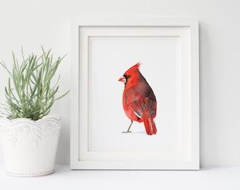 Cardinal print of watercolour painting C091DL, downloadable print, instant download, cardinal watercolour painting