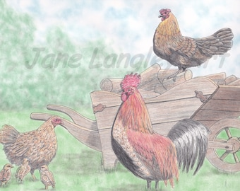 Chickens : Original artwork in pen and pastel, A4 size