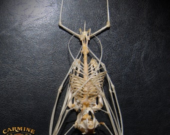 Small Articulated Bat Skeleton