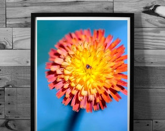 Flower photography, yellow and orange, color photography, nature, macro, instant download, printable art, home decor