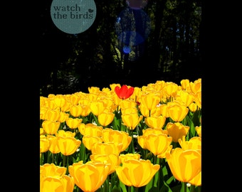 Stand Out From The Crowd - Tulip, flower, photograph, home decor, wall art,