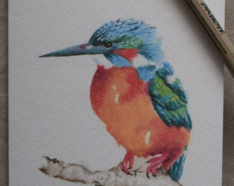 Kingfisher waiting patiently for his catch watercolor painting card-Prints only