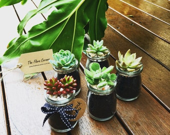Succulents Wedding Favors Wedding Bombonieres